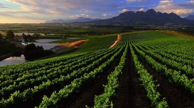 4 facts about Stellenbosch you may not know