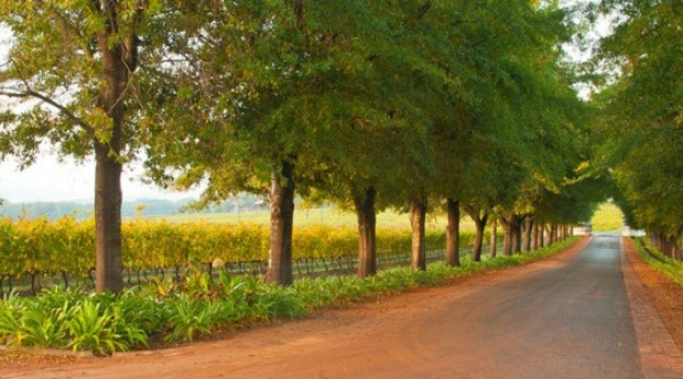 It's time to celebrate autumn's arrival in Stellenbosch